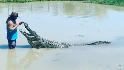 Un hombre alimenta al cocodrilo cautivo más grande de EEUU