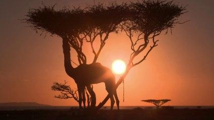 Dakar 2021 - Saudi Arabia Landscapes