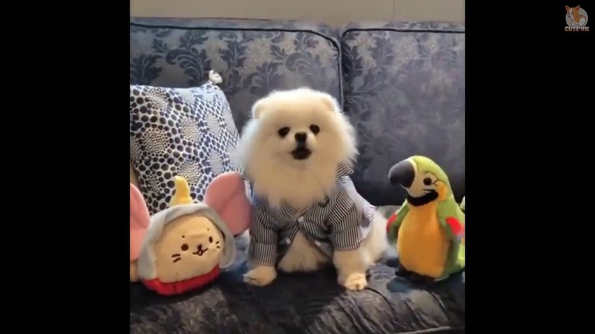 Cute Puppies Doing Funny Things #1  - Cute  Animals