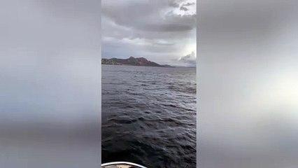 Saint-Raphaël : une baleine fait sensation au large du Dramont !