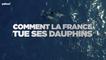 Comment la France tue ses dauphins