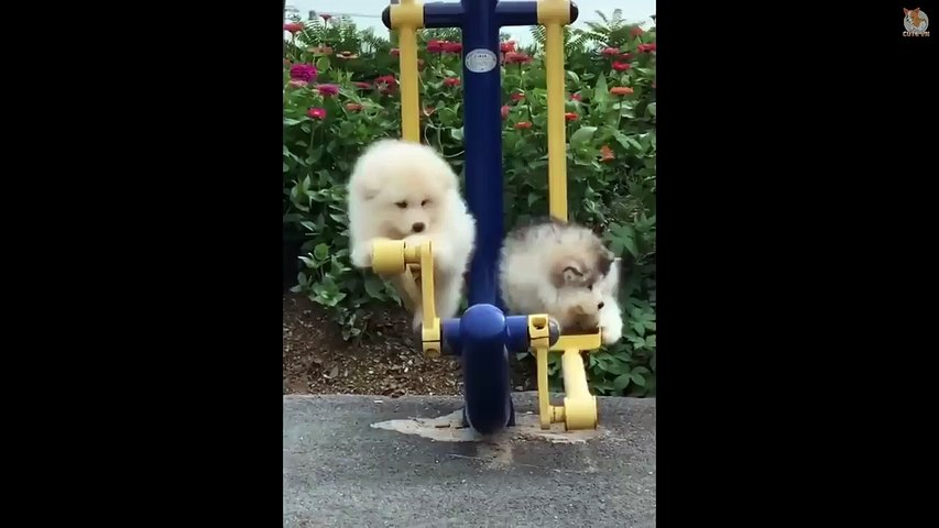TRY NOT TO LAUGH - Funny and Cute Animals Compilation 2019 #22 - Cute animals