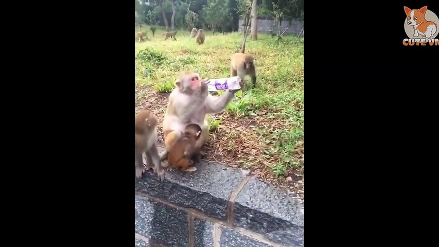 TRY NOT TO LAUGH - Funny and Cute Animals Compilation 2020 #83- CuteVN Animal
