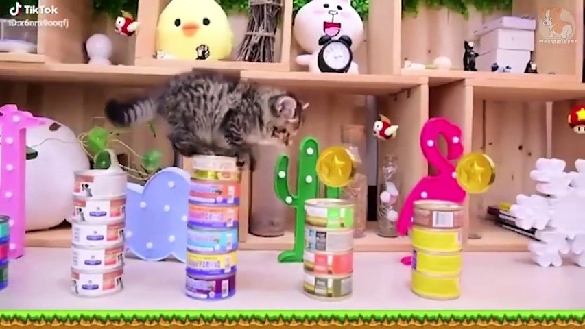 ♥TikTok Pets- Funny and Cute Pets Compilation #6♥ - Cute animals