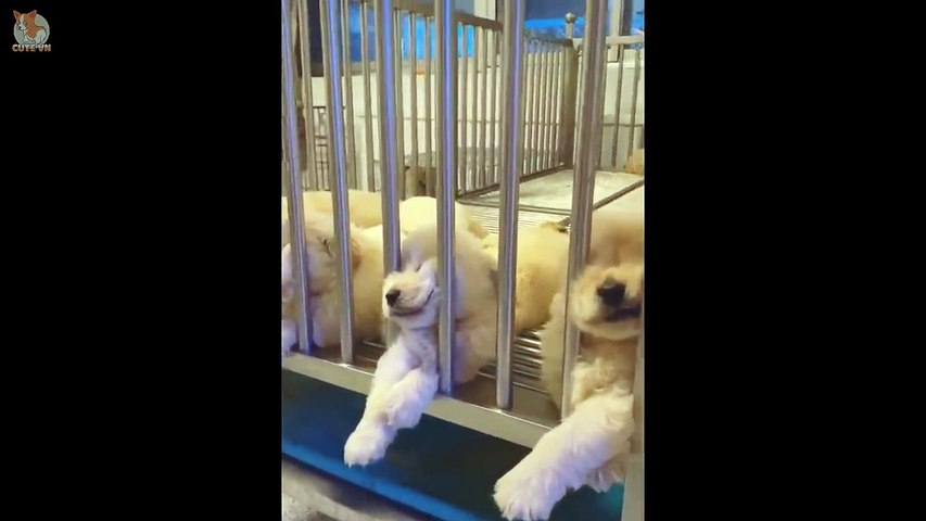 Cute Puppies Doing Funny Things 2020  #5 - Cute  animals
