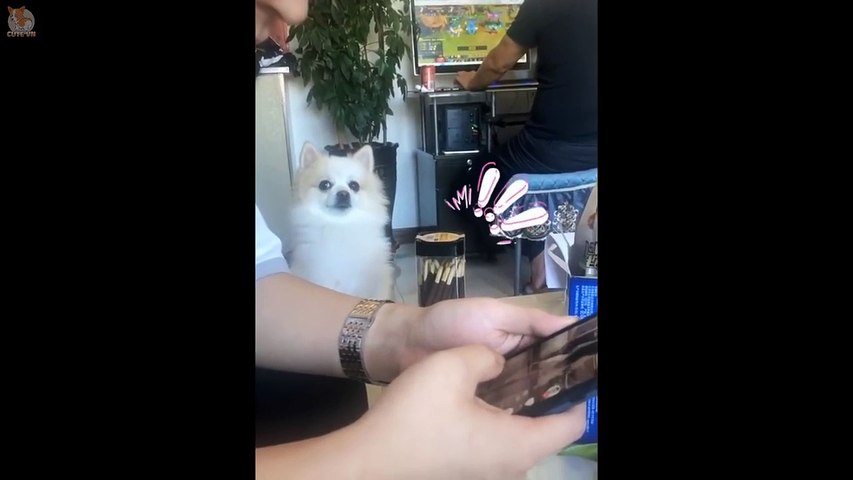TRY NOT TO LAUGH - Funny and Cute Dog and Cat Compilation 2020 #46 - Cute animals