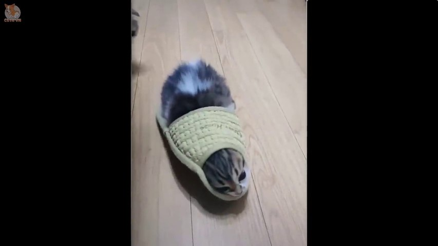 These Cats Are Stuck  Funny and Cute Cats Compilation 2020 - Cute animals