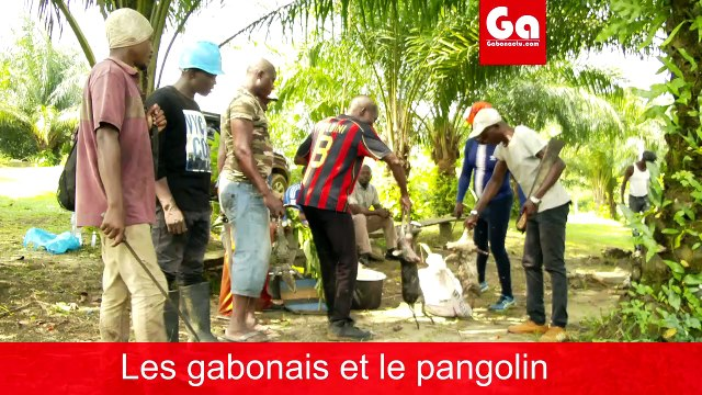 Coronavirus et le pangolin au Gabon.