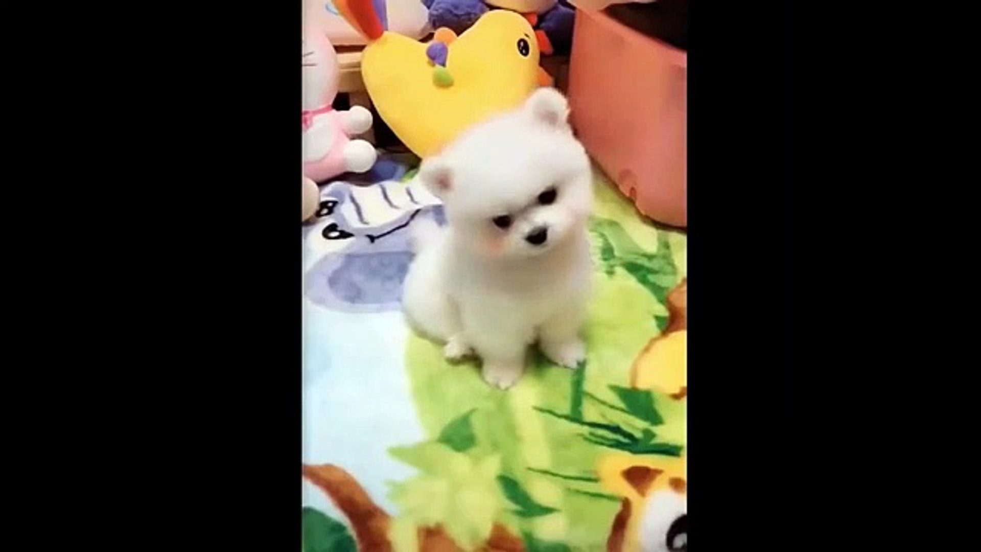 Animals SOO Cute  Cute baby animals Videos