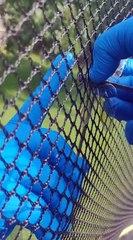 Animaux : Une libellule coincé dans le filet d'un trampoline