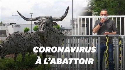 Covid-19: en Allemagne, plus de 700 employés d'un abattoir testés positifs