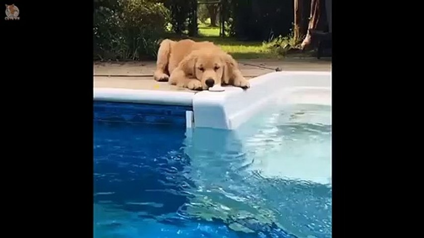 Cute Puppies Doing Funny Things 2020  #3 - Cute VN