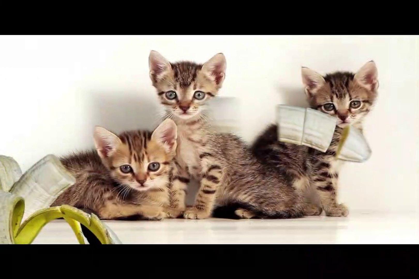 Cute cats| Cats are Cute| Cute cat videos | Cute cat funny videos|cat| Cats|kittens|three little kit