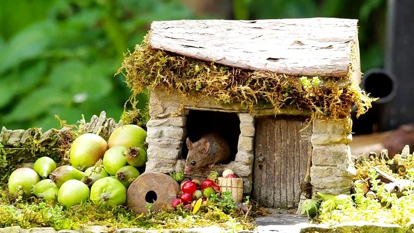 little mouse in a little house