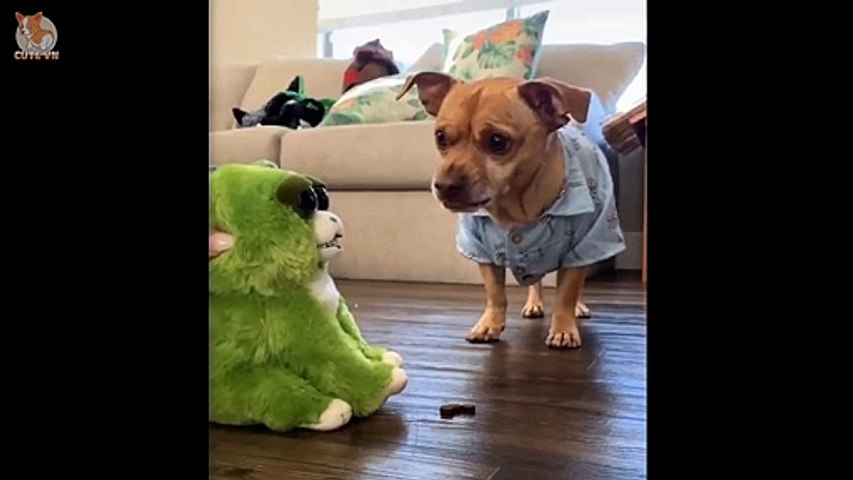 Cat and Dog Reaction to Playing Toy - Funny Cat and Dog Toy Reaction Compilation - Cute VN