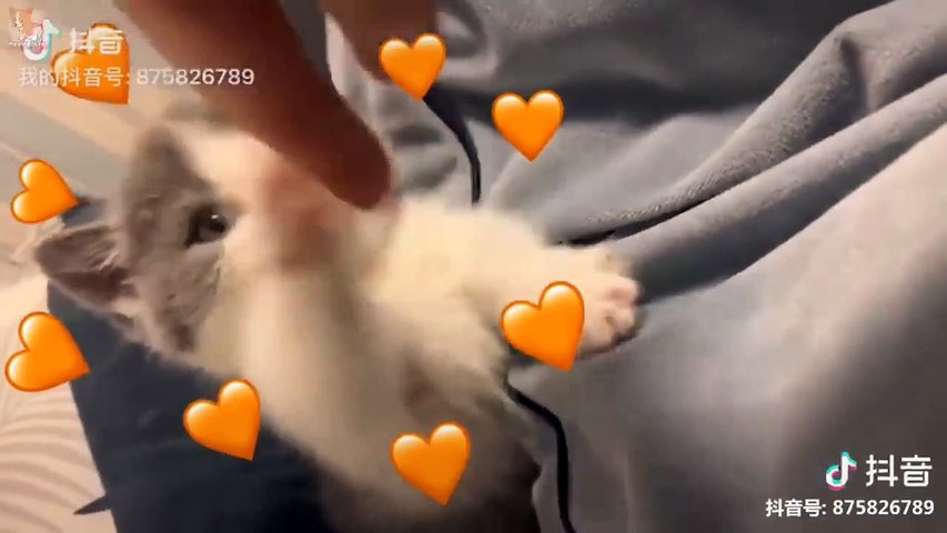 Aww - Funny and Cute Dog and Cat Compilation 2019 #28 - CuteVN