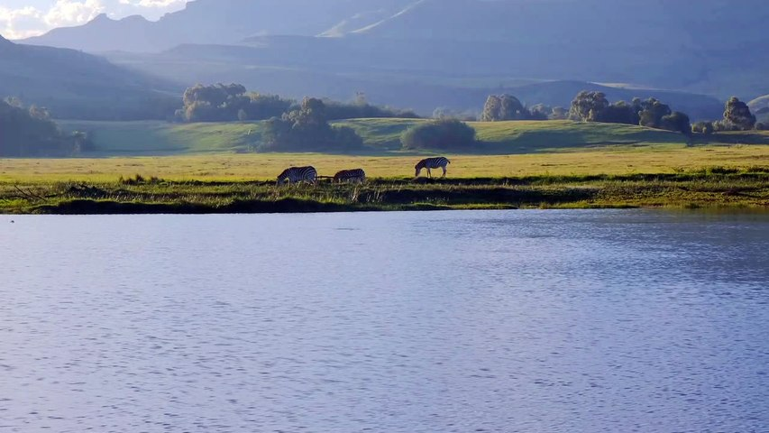 Beautiful landscape with zebras