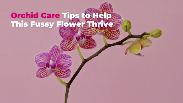Orchid Care Tips to Help This Fussy Flower Thrive