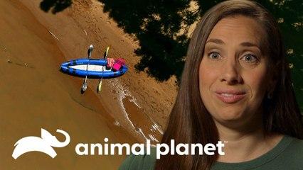 Fotógrafa de animales fue embestida por un hipopótamo | Solo y en peligro | Animal Planet