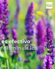 Plantas que reducen tus niveles de estrés y ansiedad