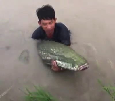 What A wonderful Fishing !!!Unbelievable   Fish Catching  20kg brown fish