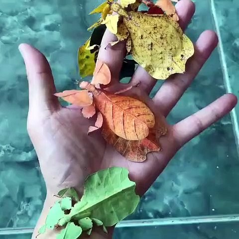Feuilles ou insectes??? Incroyable