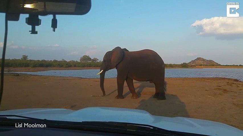 Cet éléphant en colère jette des bouts de bois sur une voiture