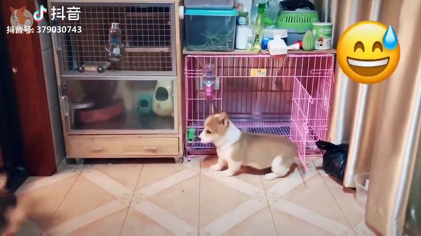 Aww - Cute Dog and Cat Compilation 2019 #3 - CuteVN