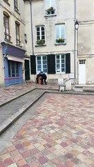 Jeune Faucon Pèlerin - Cathédrale de Bayeux
