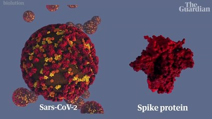 How would a coronavirus vaccine work and will we even get one? – video explainer