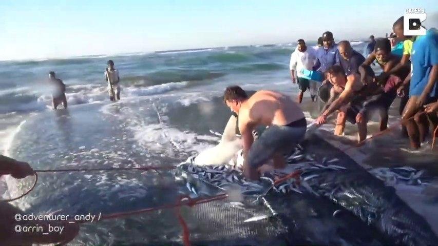 Des touristes essaient de sauver un requin piégé dans un filet