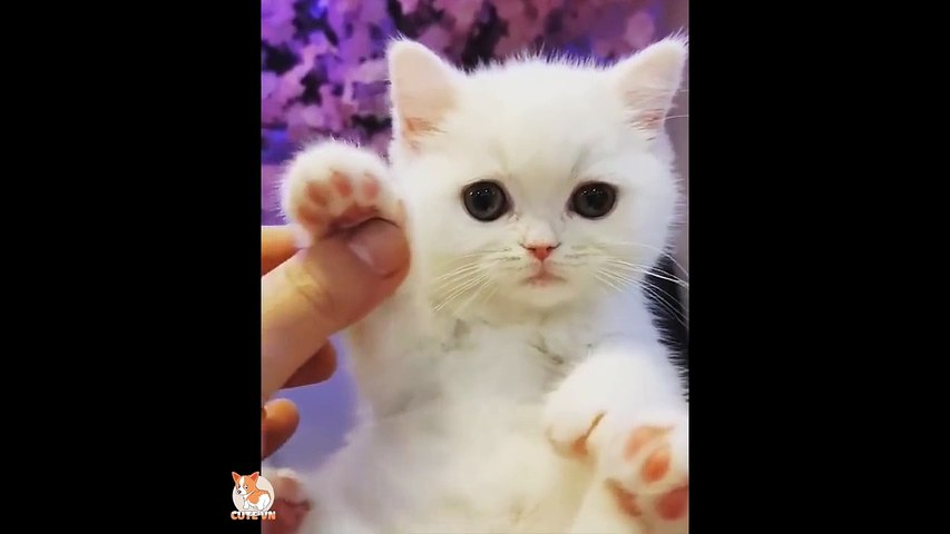 ♥Happy Cats Compilation - Cutest Cat Ever 2018♥ #3
