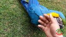 My Parrots Love Me!