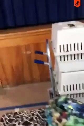 Un bébé dans une cage??? Pas certain
