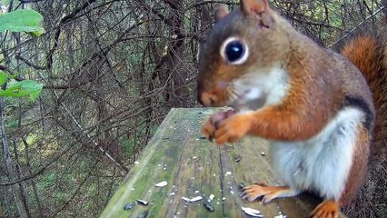 Forest Birds and Squirrels - Video for Cats and other bird lovers