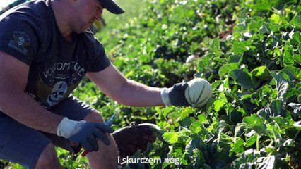 4/4 - Sezon bez zmartwień, zbieranie melonów  / Une saison sans soucis, la cueillette de melon
