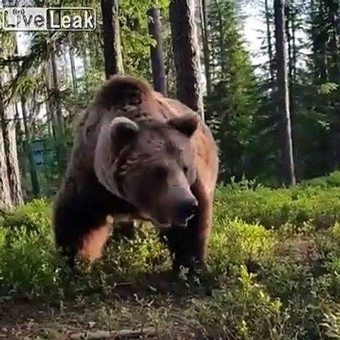 Il tombe sur un Ours au réveil en sortant de sa tente