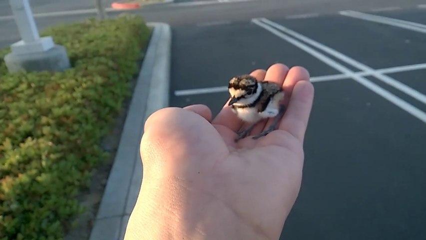 Il trouve un bébé oiseau et le remmène à sa maman... Adorable