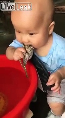 Doudou bio, ce bébé tette une grenouille
