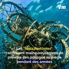 Des filets de pêche connectés pour limiter la pollution des mers