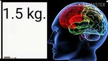 ensan ka tisre ankh hota he kya or brain ke bareme kuch rochak tathya - brain`s amzing facts