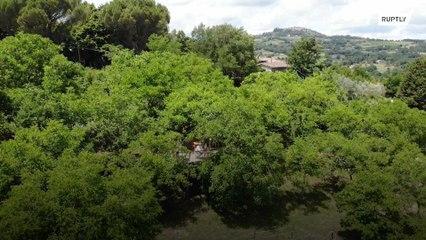 Italian couple set up tree-top social distancing friendly restaurant amid COVID-19 crisis