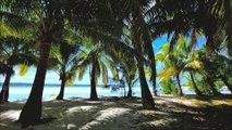 ヤシの木とビーチ by エリートスタイル