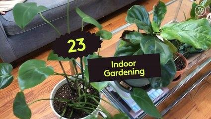 How To Start An Indoor Garden