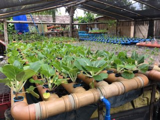 How This Bacolod Engineer Helped Change a Community Through Container Gardening