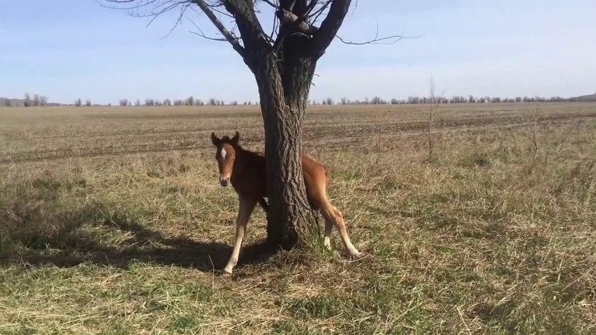 Ce poulain s'est retrouvé coincé dans un arbre... opération sauvetage