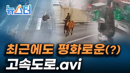 표지판이 부서지고, 동물농장이 펼쳐지고, 고속도로에 드러눕기까지??? 고속도로 위 황당 사고들 [뉴스터]