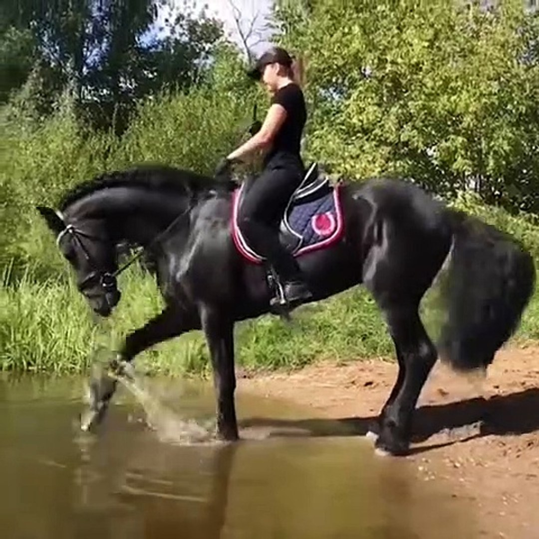 Cute And Funny Horse Videos Compilation Cute Moment Of The Horses Cutest Horse Video Dailymotion