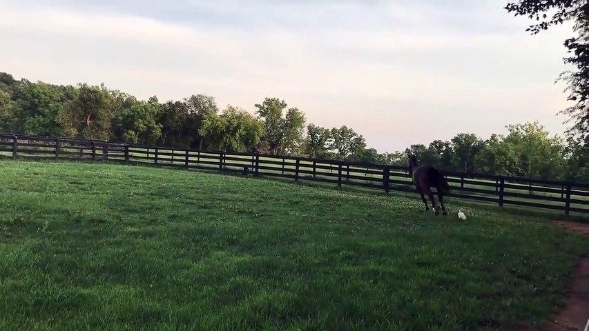 Ce cheval a un entraineur très spécial... Aller, au galop