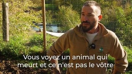 Fundación Santuario Gaia : un centre de secours pour les animaux de la ferme